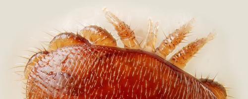 Aktualisiert: Hoffnung für alle Imker – Veitshöchheimer Bienenexperten finden Mittel gegen Varroa-Milben