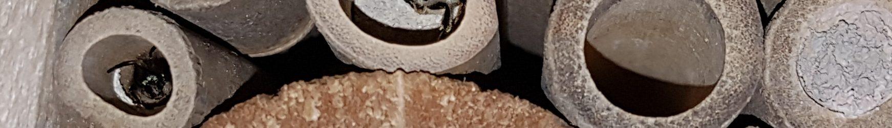 Unsere neuen Untermieter: Mauerbienen