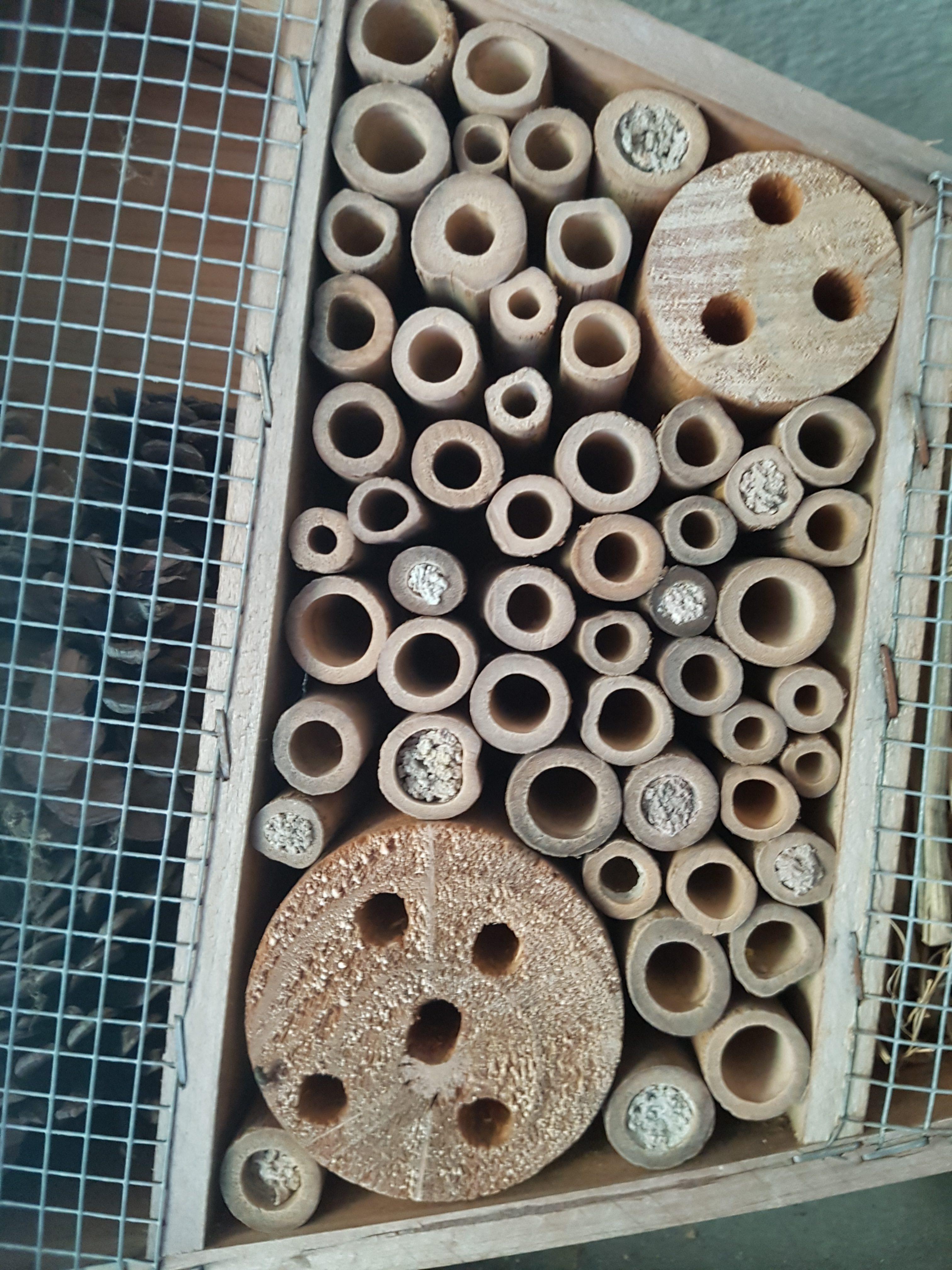 Kleine Kolonie Mauerbienen als Untermieter © Thomas Petschinka
