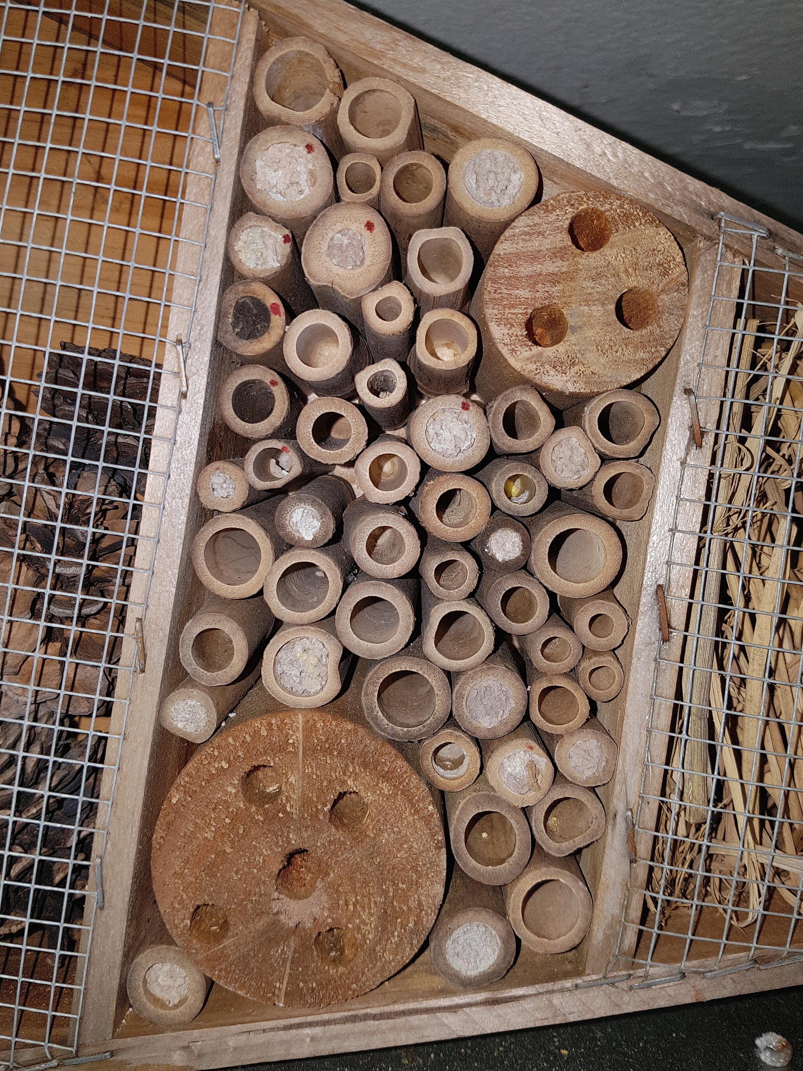 Mauerbienen als Untermieter; Stand 07.05.2018 16:20 Uhr © Thomas Petschinka