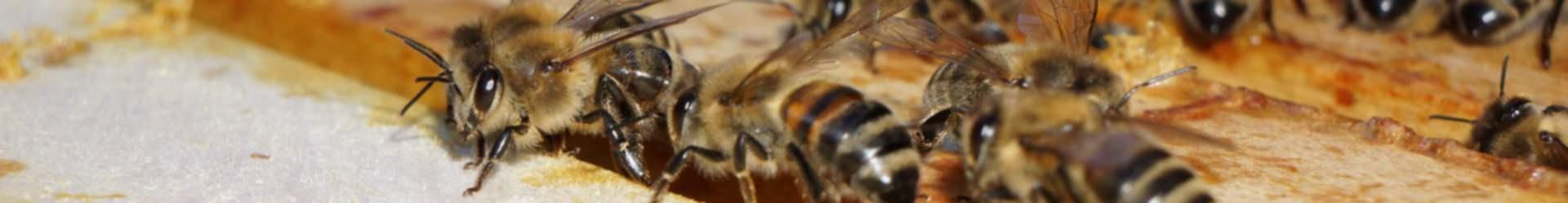 Honig aus Nürnberg Mögeldorf – Sommer 2019