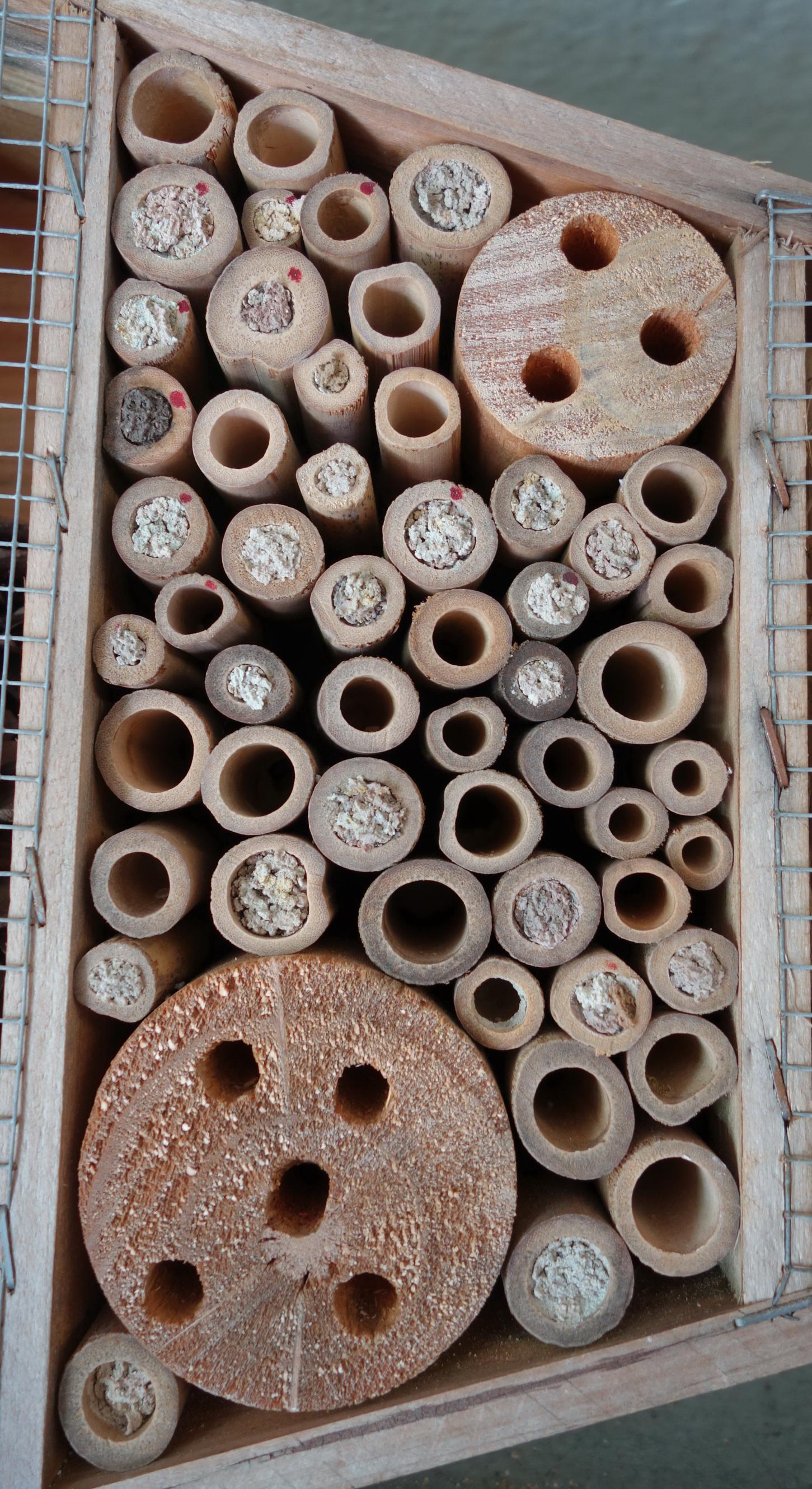 Mauerbienen als Untermieter; Stand 24.05.2018 16:30 Uhr © Thomas Petschinka