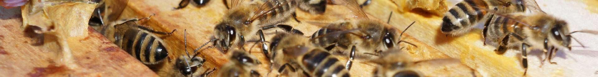 Impressionen beim Bienenvölker-Check