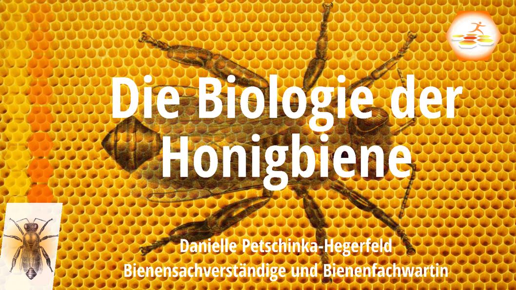 Die Biologie der Honigbiene