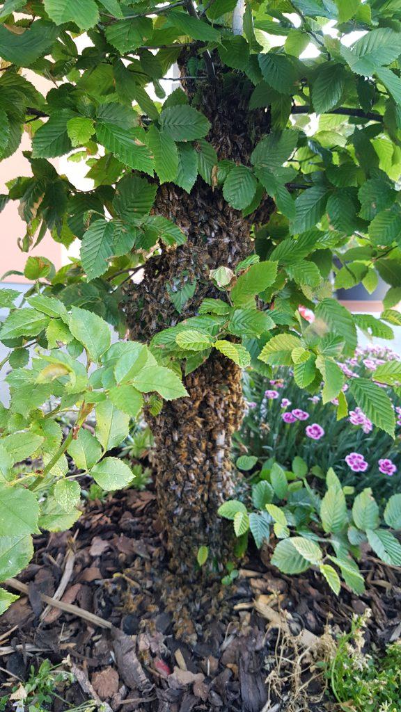 Erst bei näherer Betrachtung sind die Bienen sichtbar