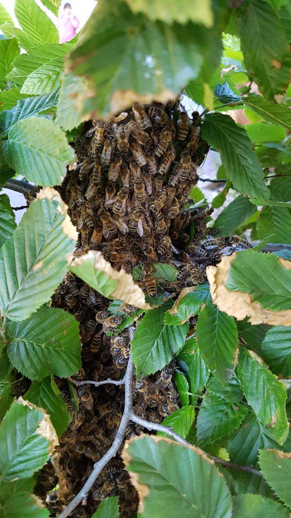 Kleine Bienen direkt am Baumstamm