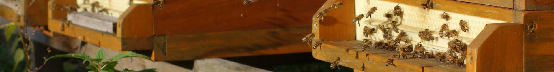 Historisches Honigglas von 1915